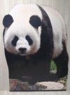 Giant Panda Cut Out XO1