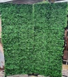 Greenery Photo Wall